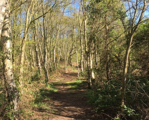 Wood & Nature Walks